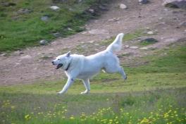 2005-07-08-09_Tasiusaq_031