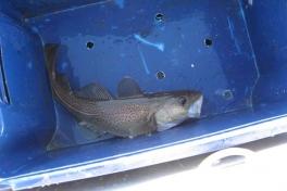 2006-10-21_maren_soeren_fisketur_002
