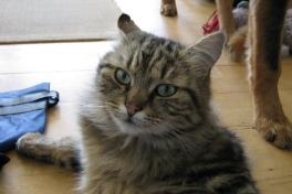 2009-06-15-1747_Kat; Muku