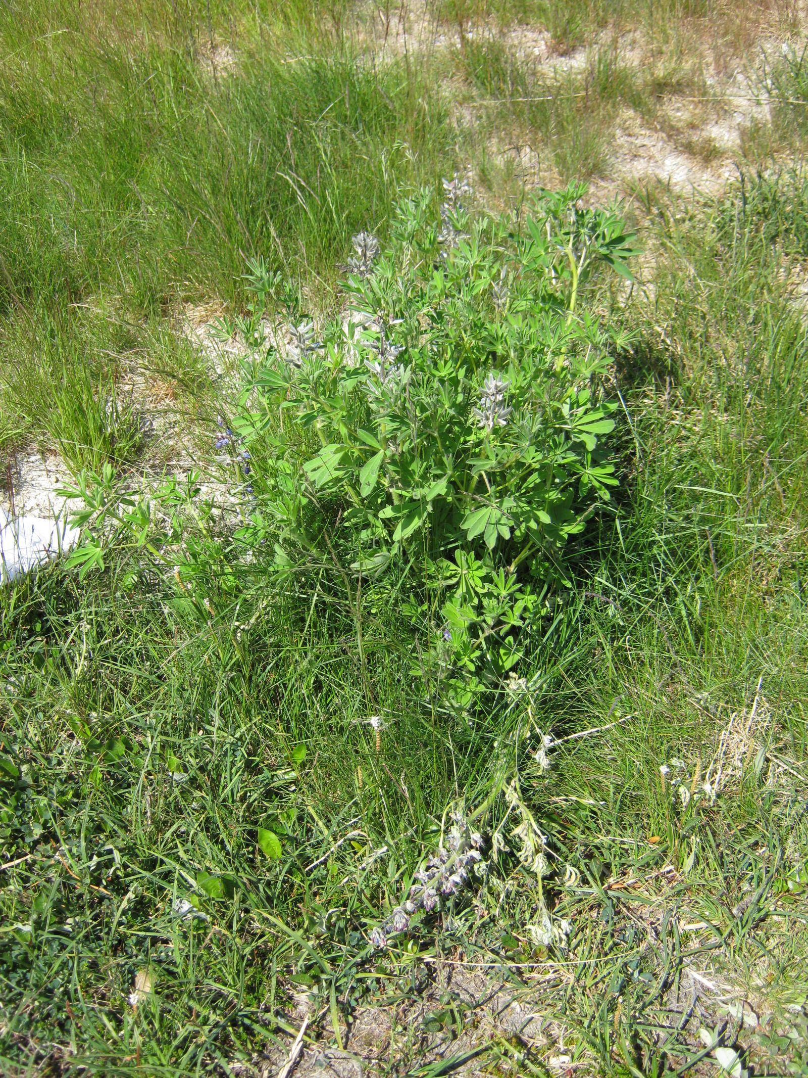 Vegetation i fjeldet