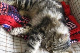 2009-07-08-1805_Kat; Muku