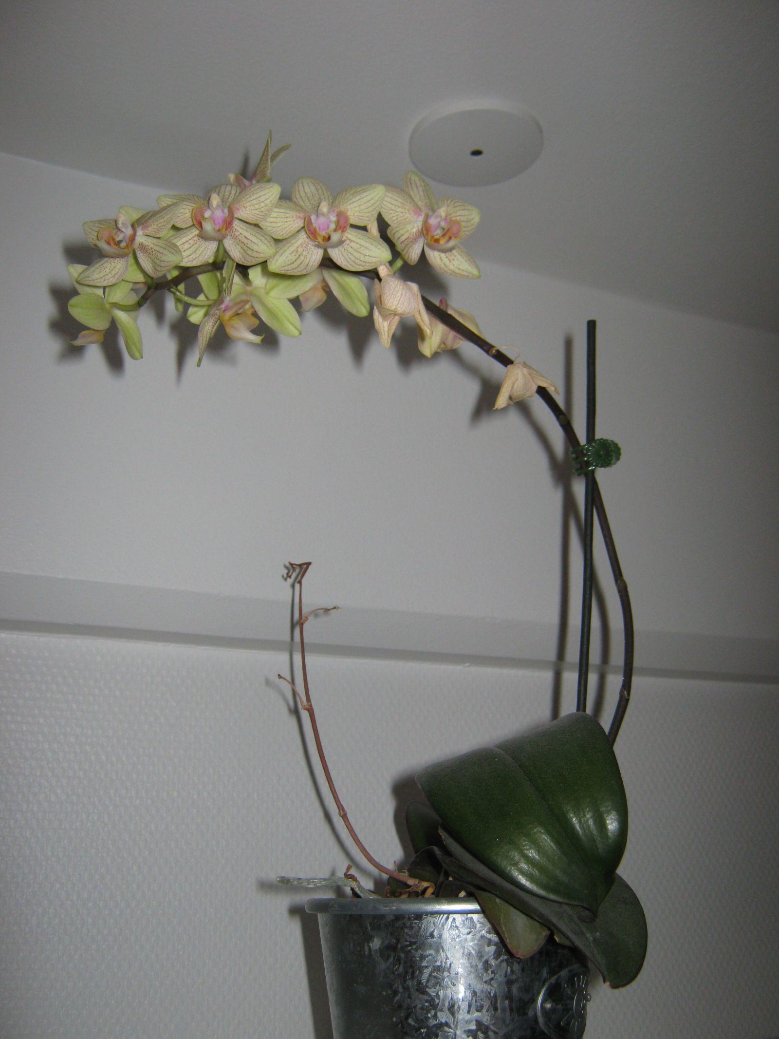2010-01-15-1633_-_Orkide