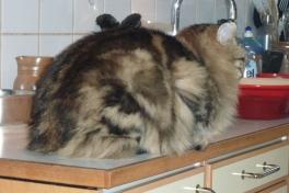 2010-03-10-1712_-_Kat; Muku; Nuuk