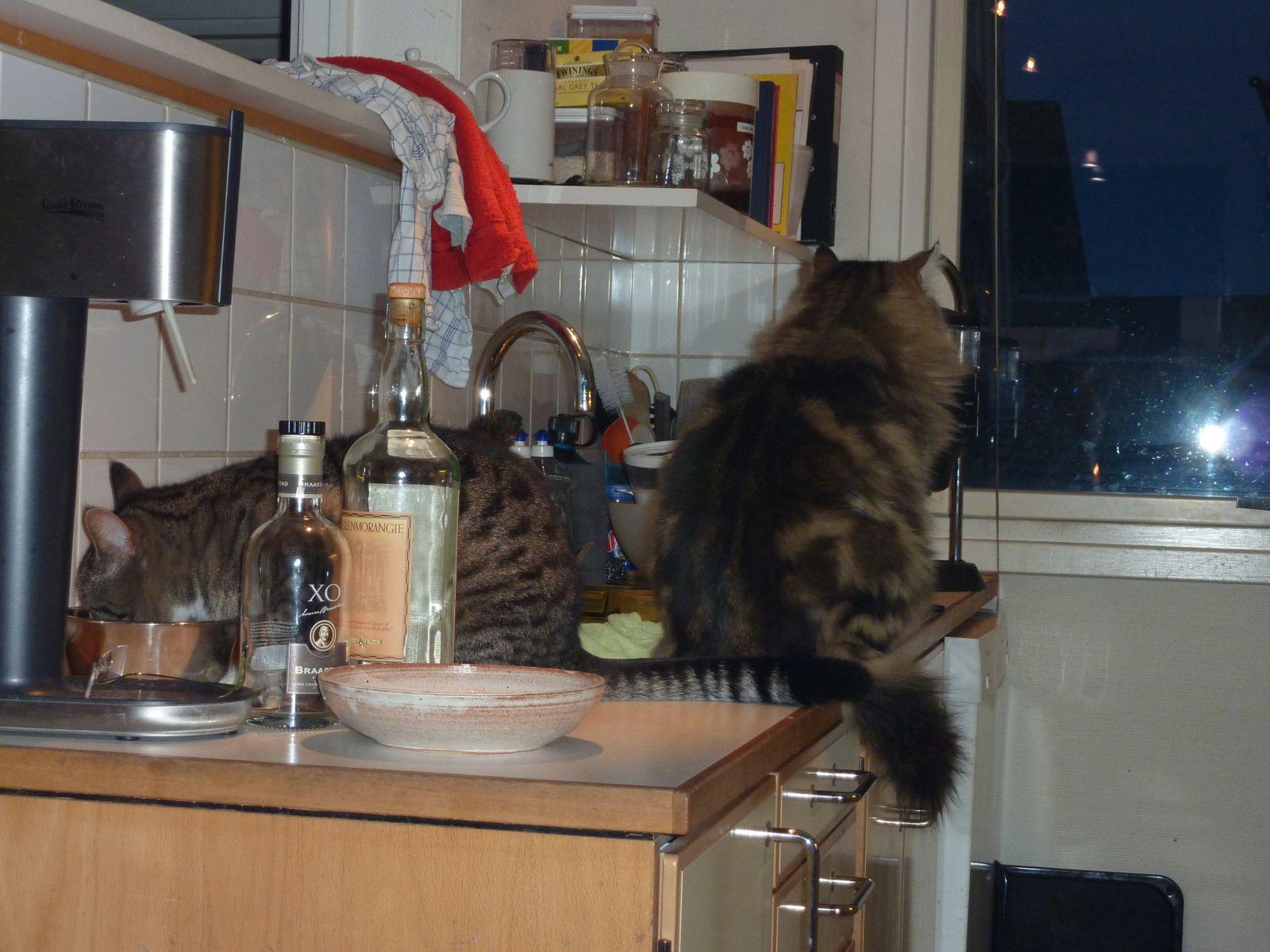 2010-03-13-1852_-_Kat; Muku; Nuuk; personer