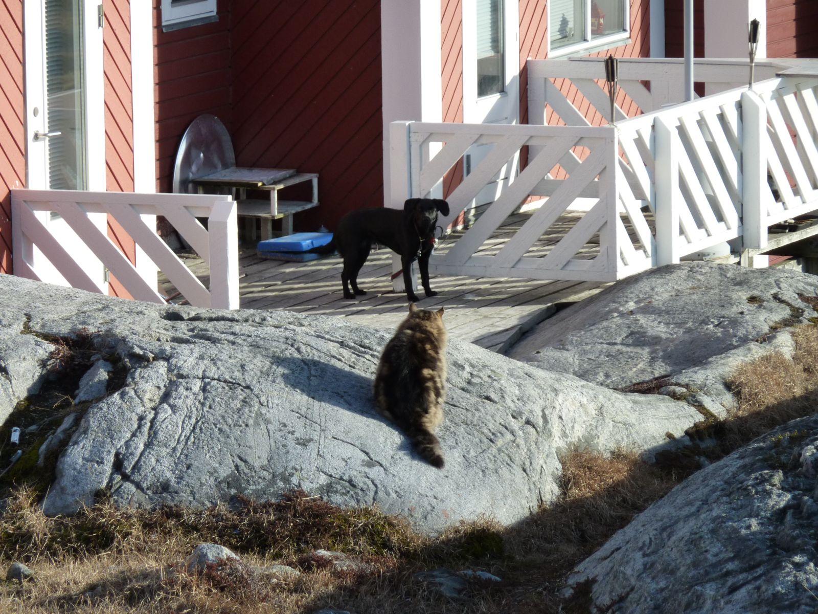 2010-05-06-1909_-_Gåtur; Kat; Muku; Nuuk
