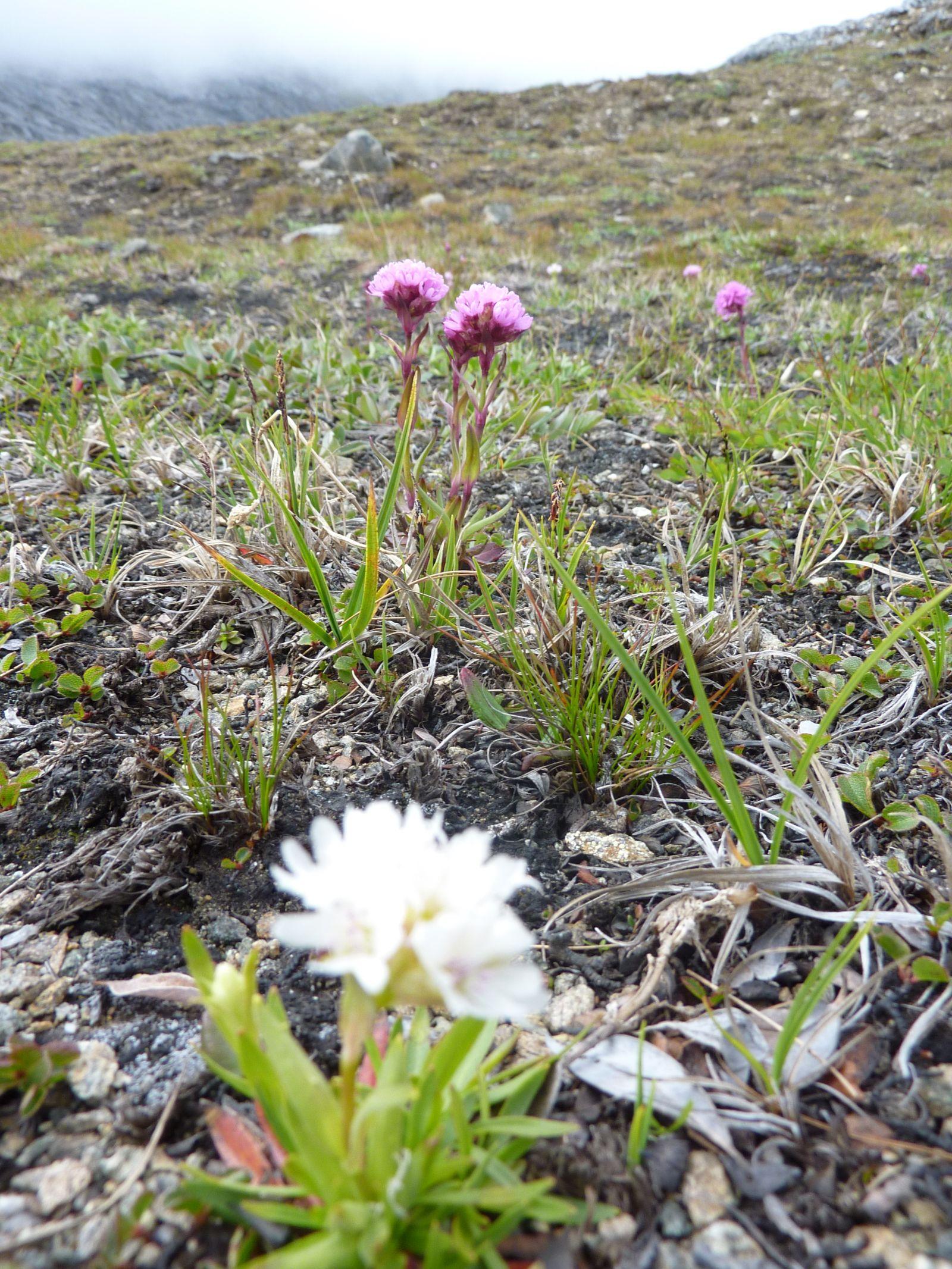 2010-06-30-1032_-_Vegetation