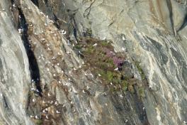 2010-08-05-1926_-_Uummannaq