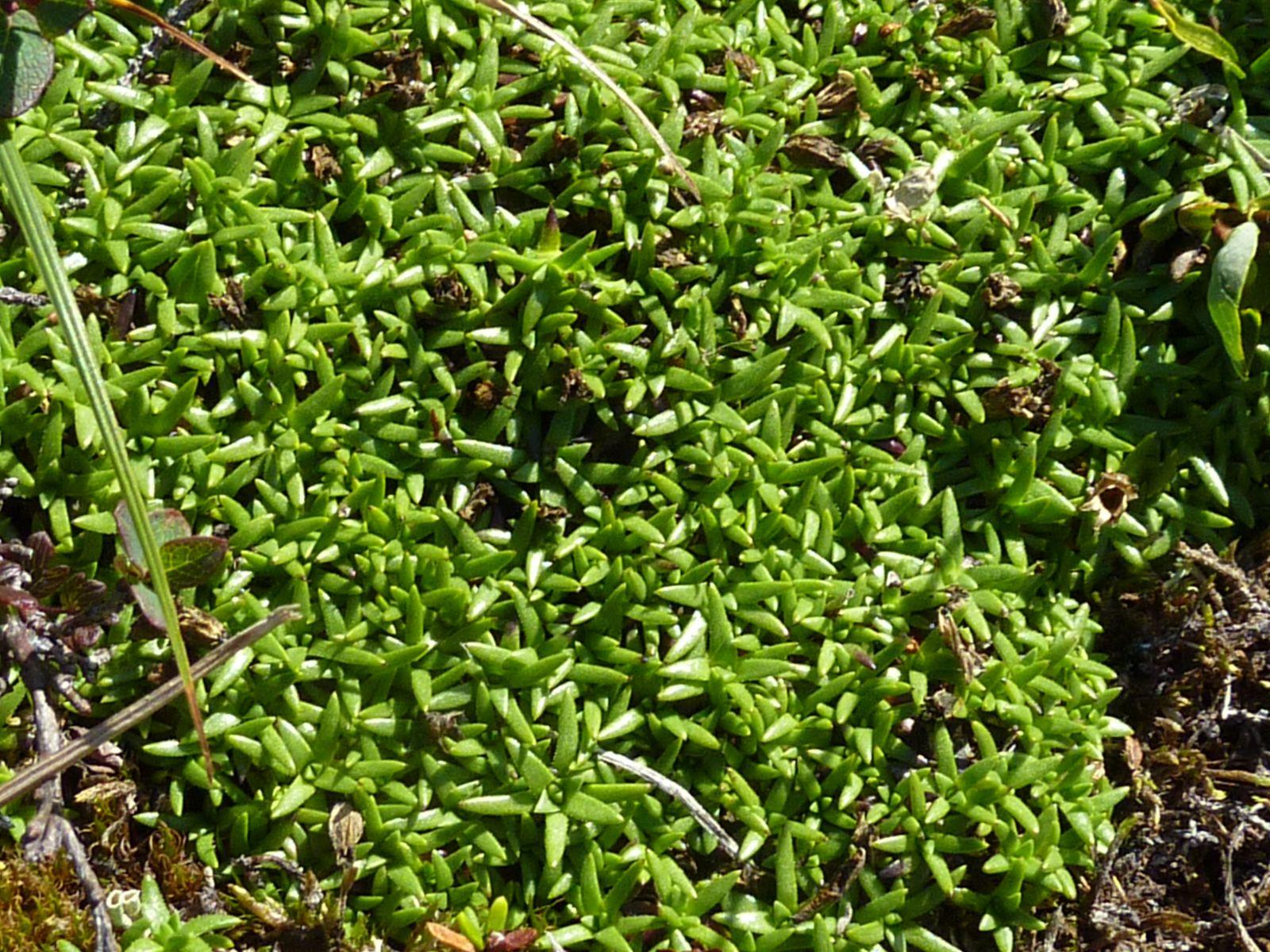 2010-08-13-1304_-_Vegetation_2