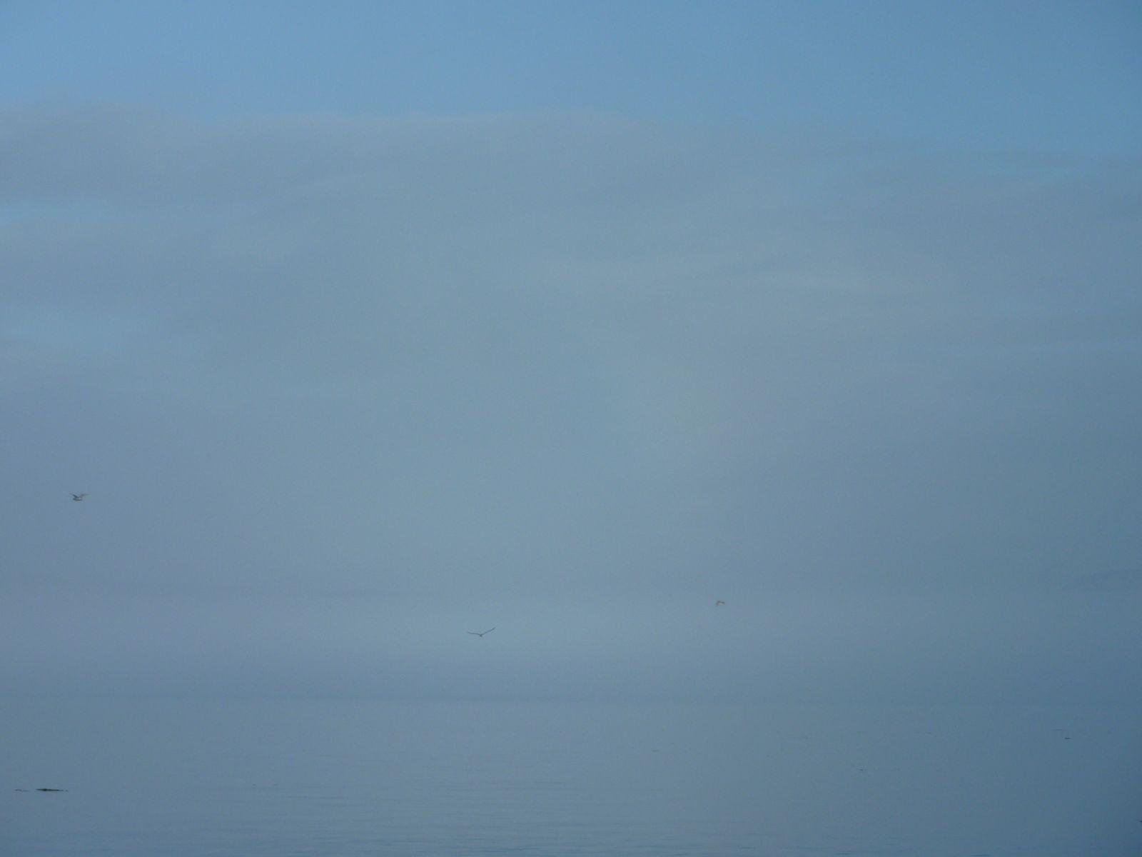 2010-08-25-1935_-_Måge; Tåge