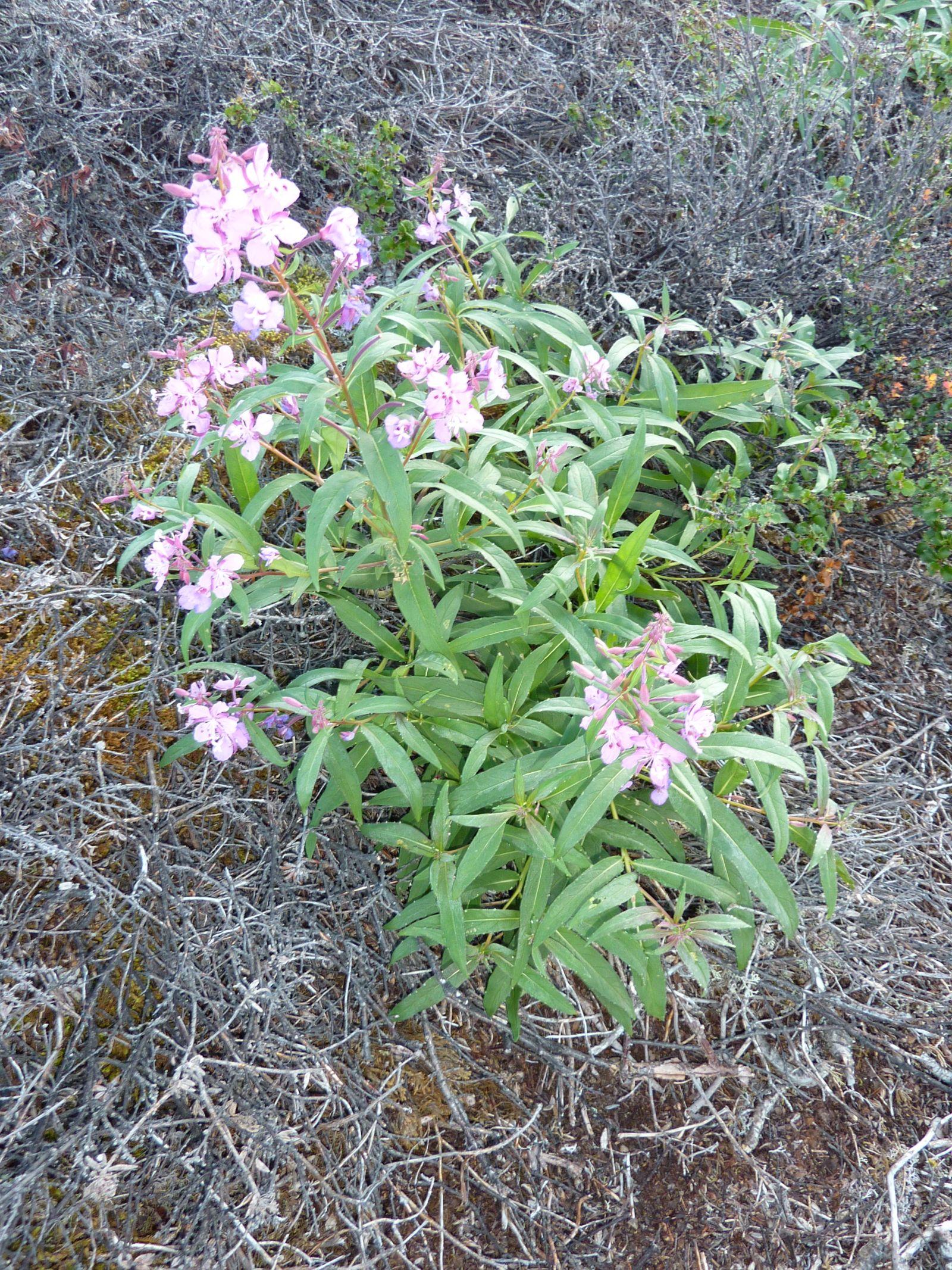 2010-09-04-0756_-_Vegetation