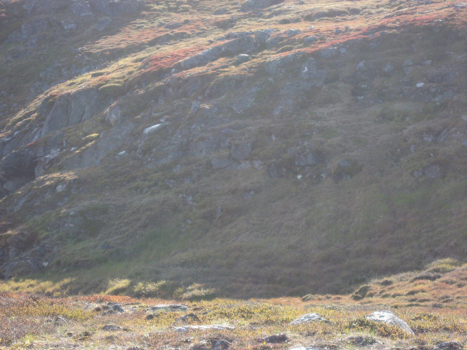 2010-09-04-0832_-_Terræn