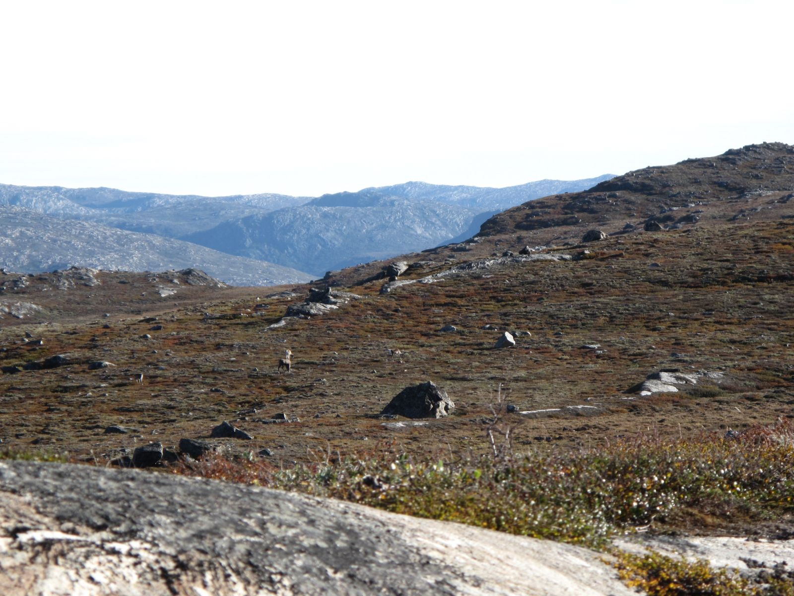 2010-09-04-0947_-_Rensdyr; Terræn