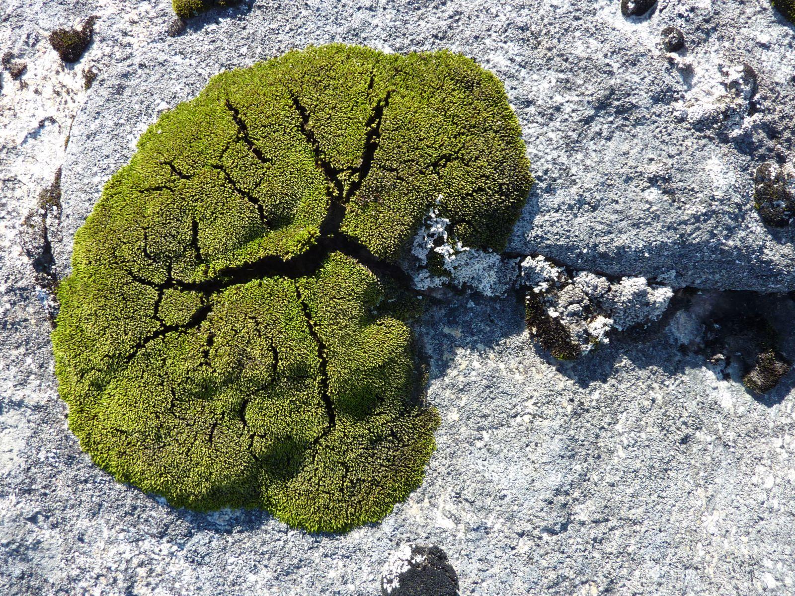 2010-09-09-1437_-_Vegetation