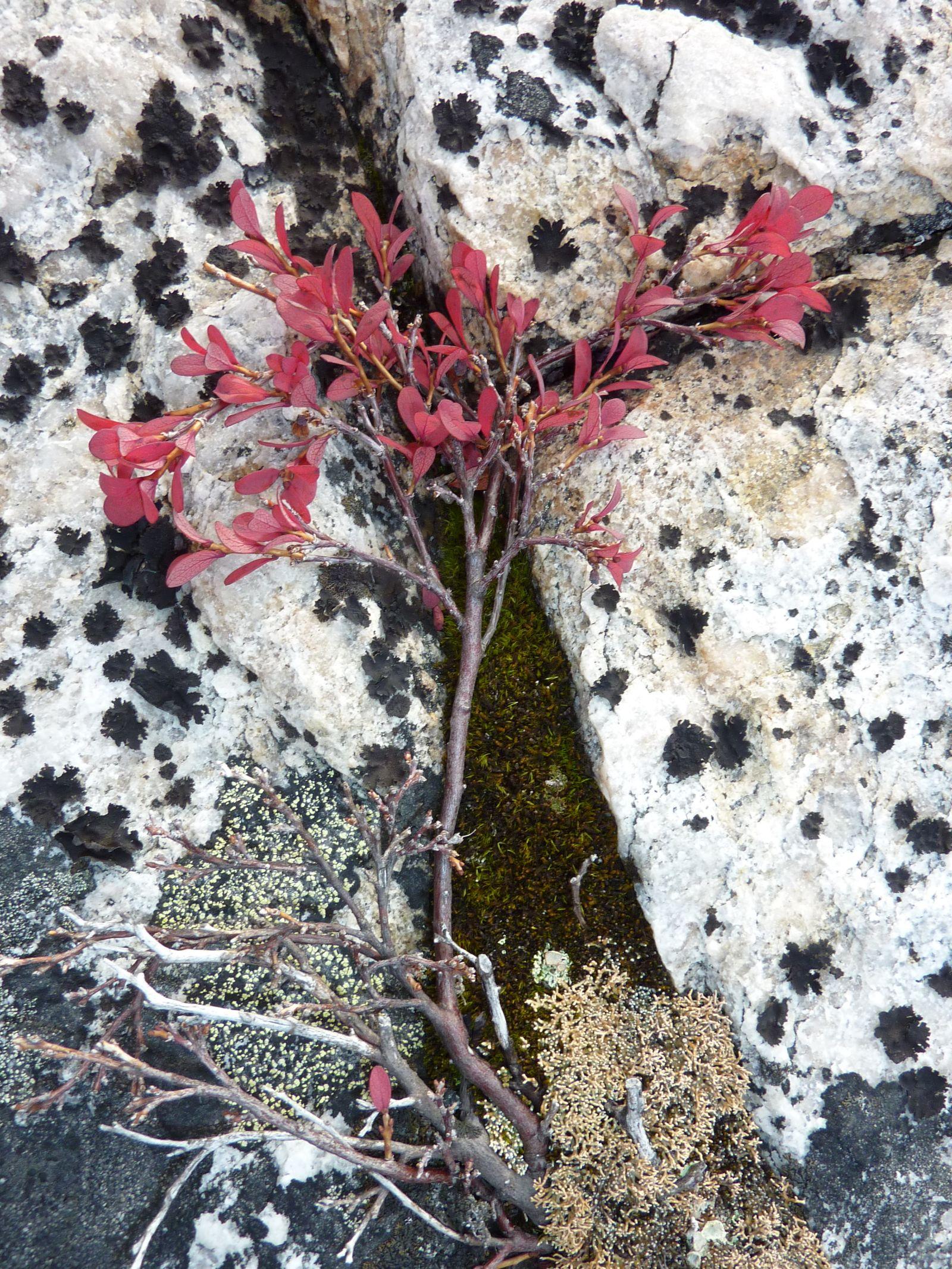 2010-09-23-1410_-_Vegetation
