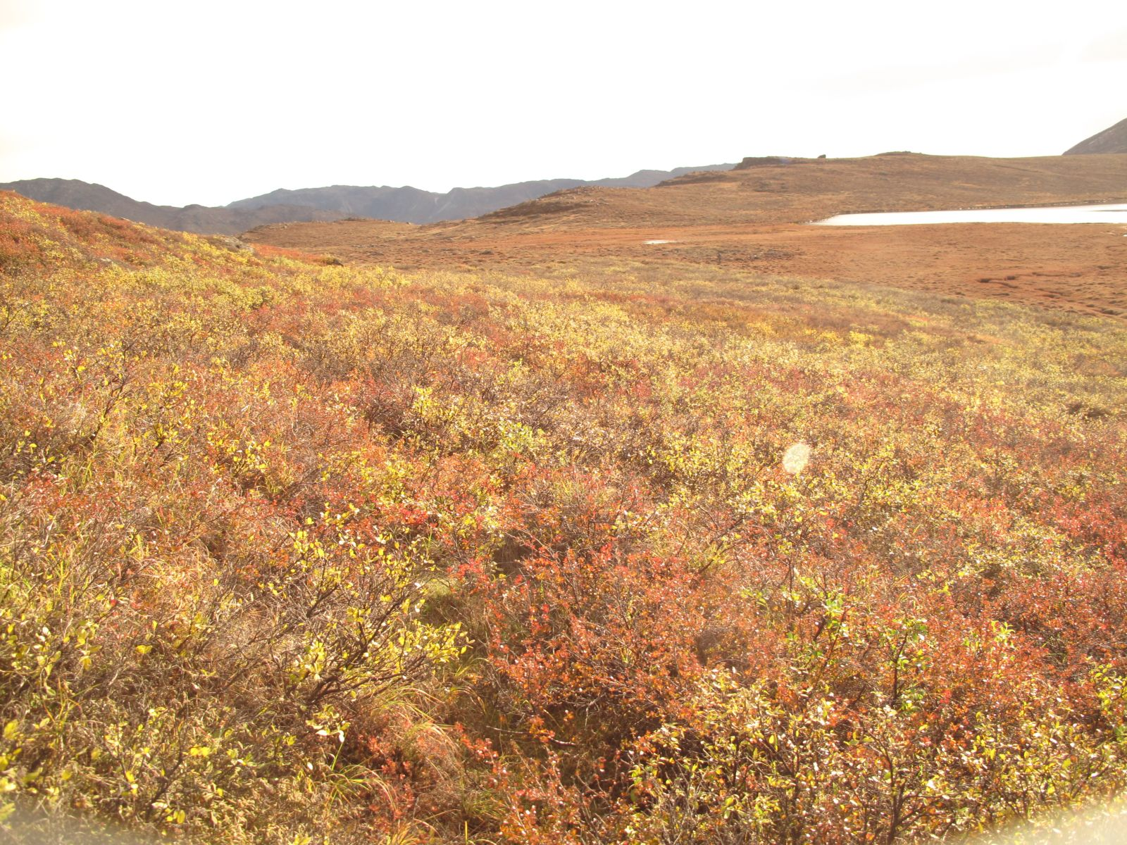 2010-09-25-1135_-_Terræn; Vegetation_2