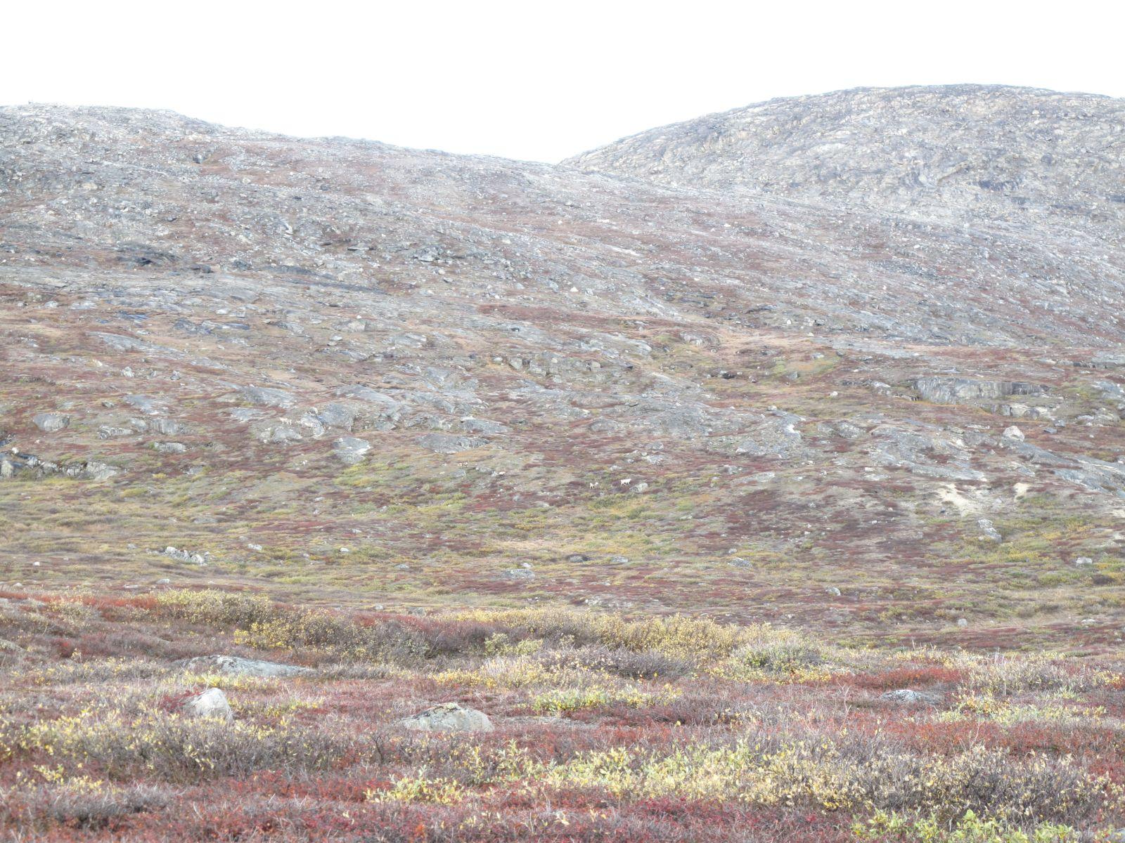 2010-09-25-1214_-_Terræn_2