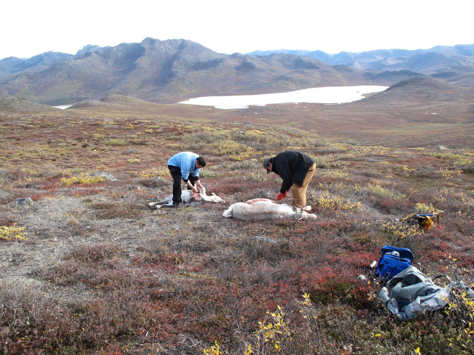 2010-09-25-1222_-_Jesper Eugenius Labansen; Rensdyr; Slagtning; Søren Labansen