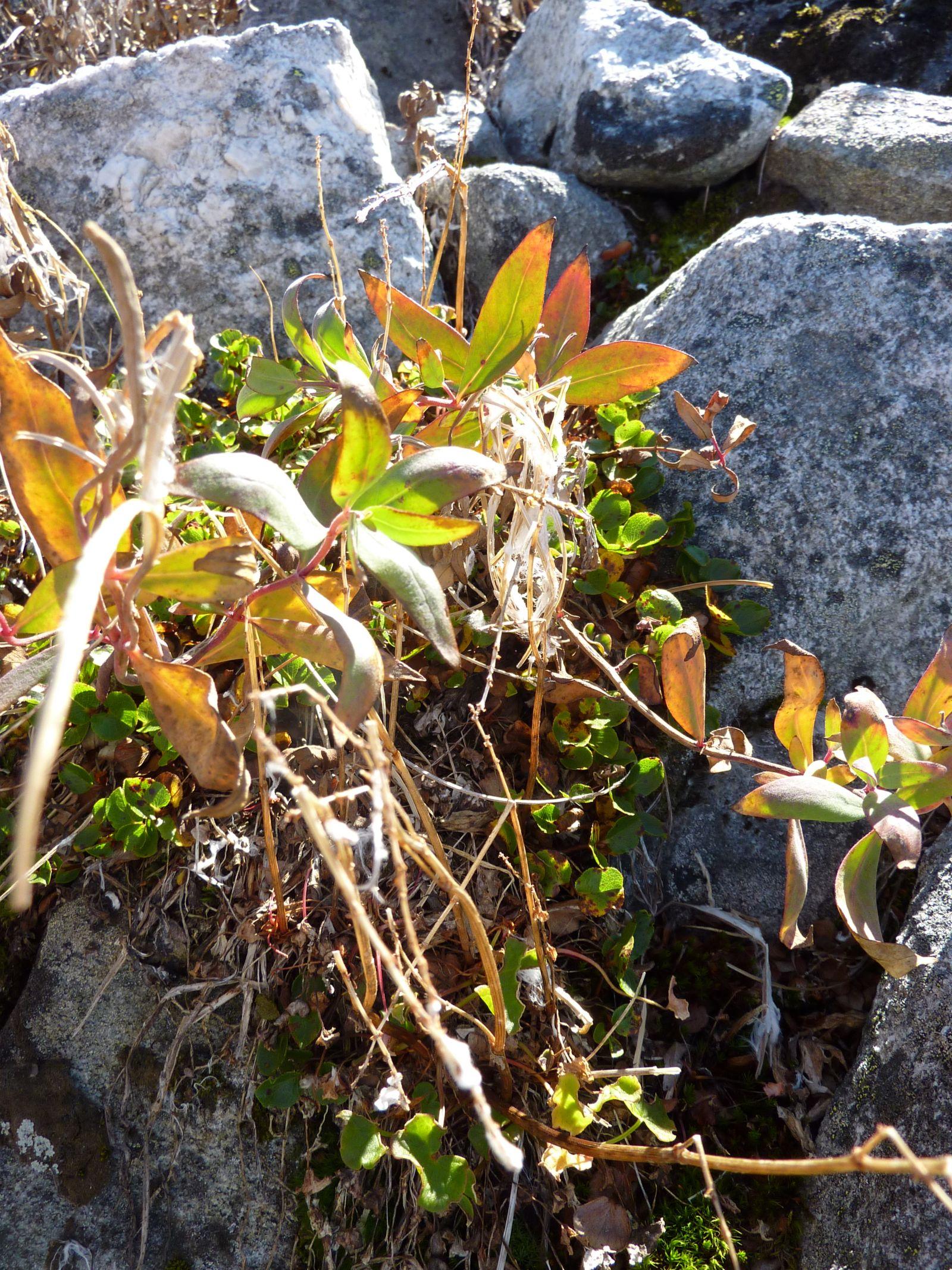 2010-09-07-1411_-_Vegetation_2