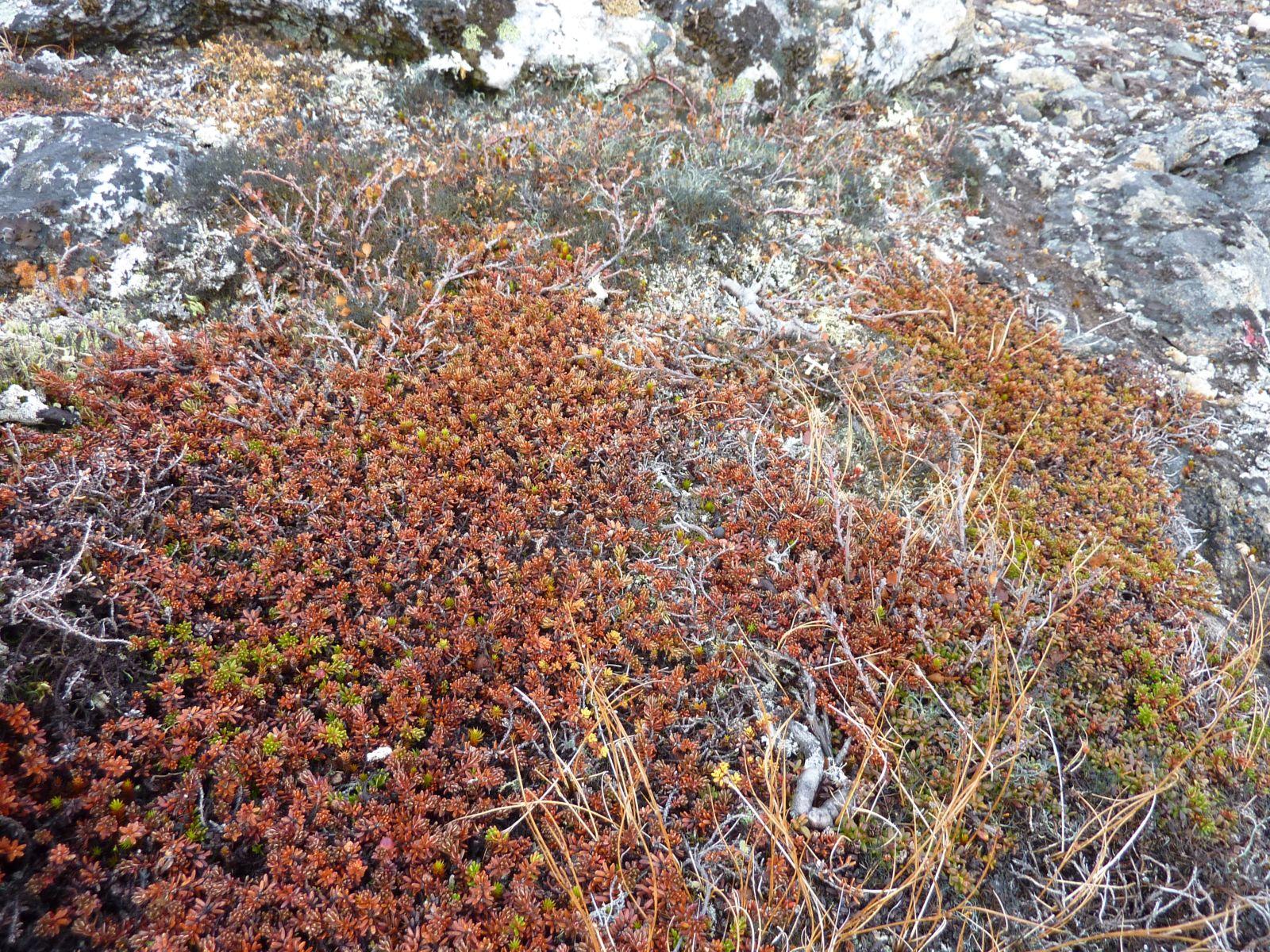 2010-09-29-1238_-_Vegetation