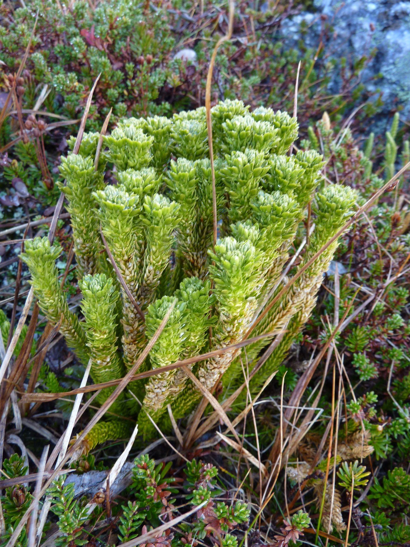 2010-10-06-1229_-_Vegetation