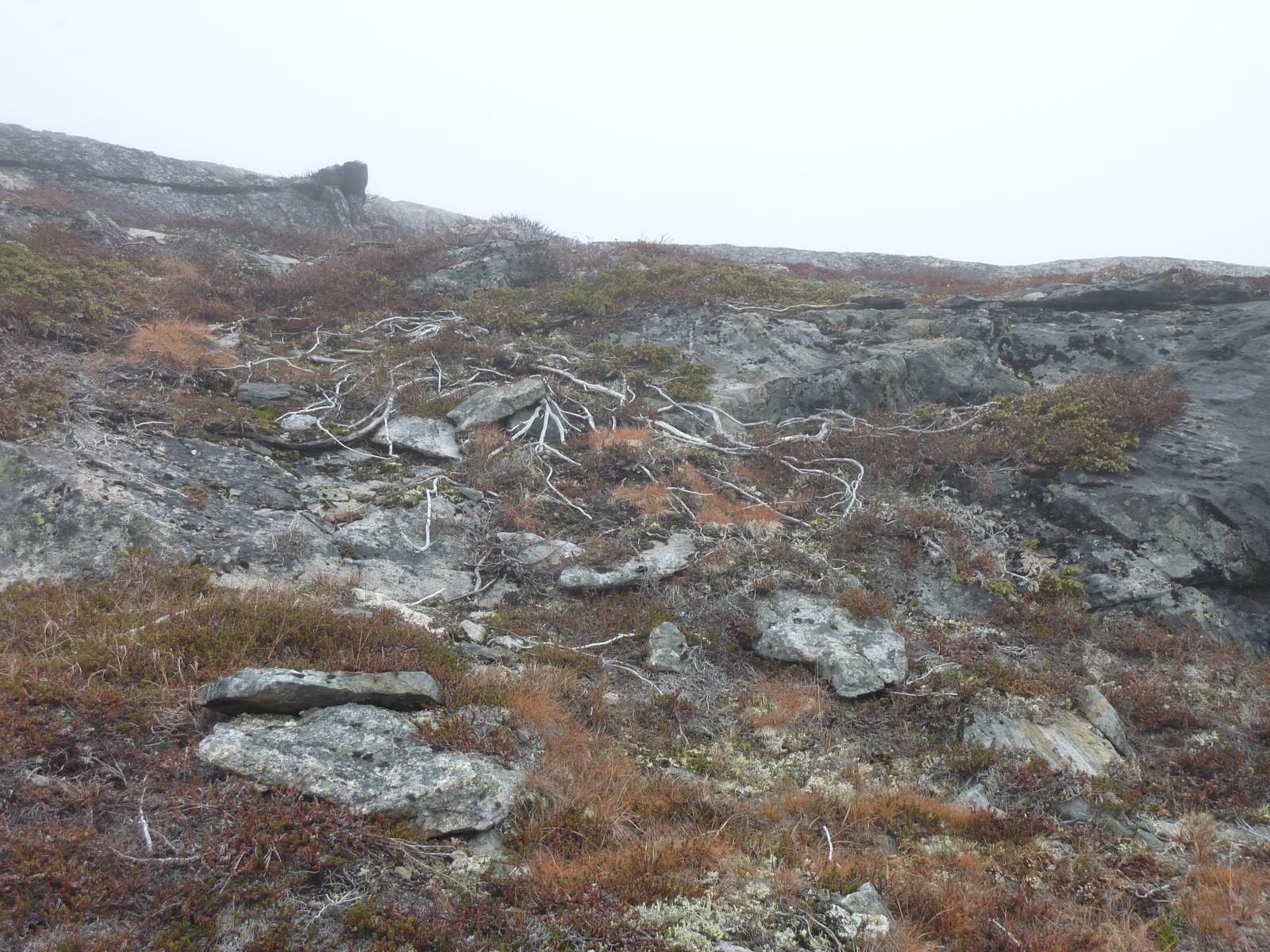 2010-10-15-1306_-_Vegetation