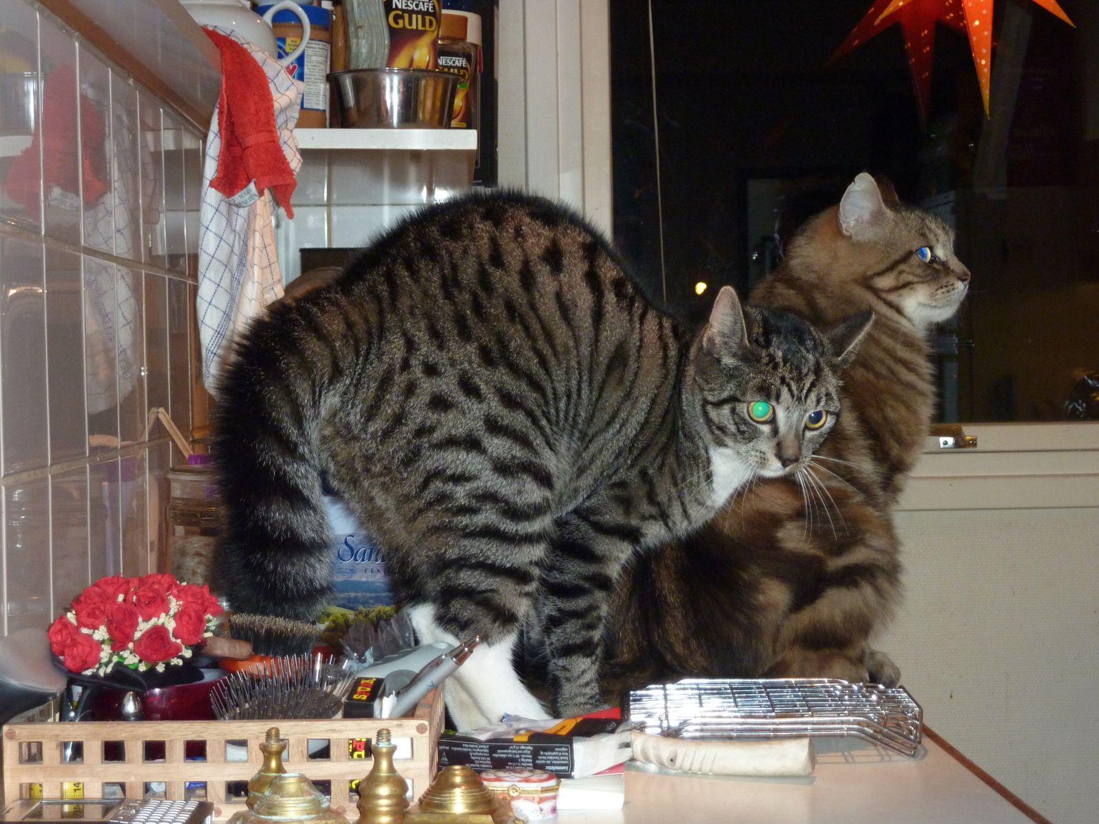 2010-12-24-1749_-_Muku; Silje