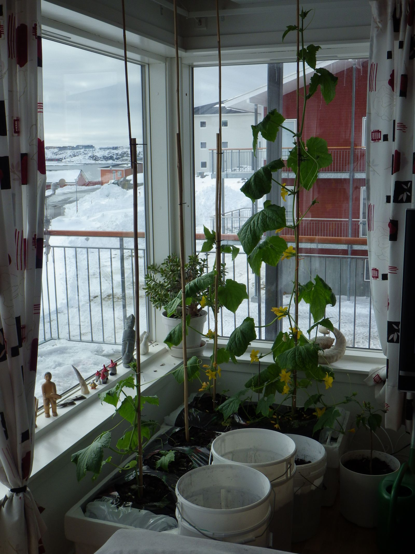2014-04-24-1558_-_Agurkeplante_Kartofelspande_Planter