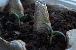 2014-02-19-1155_-_Planter_Roed-peber