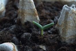 2014-02-19-1156_-_Planter_Roed-peber