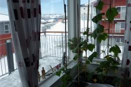 2014-04-25-0918_-_Agurkeplante_Kartofelspande_Planter