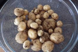Nyhøstede hjemmelavede kartofler