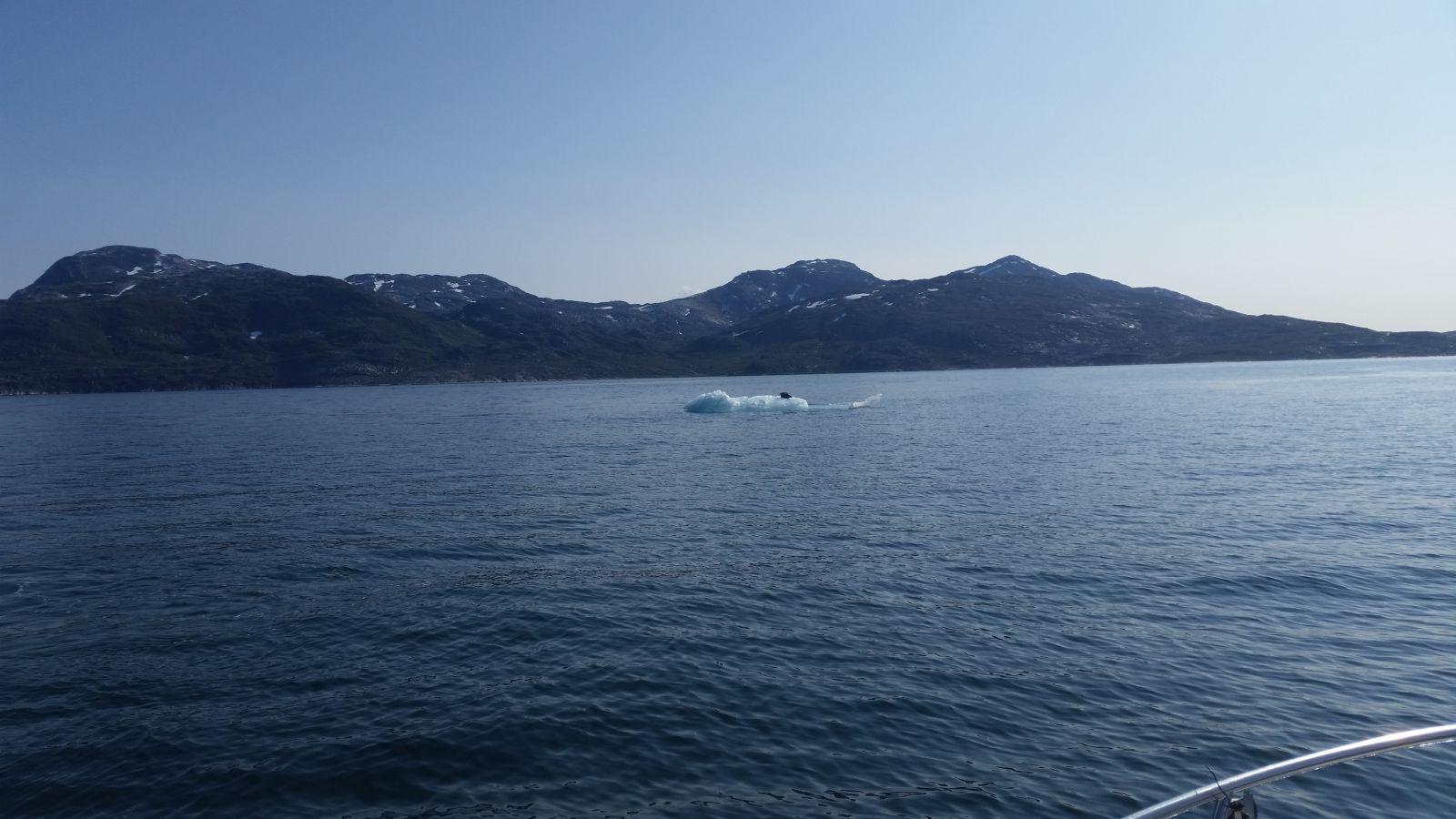 Sæl på isflage