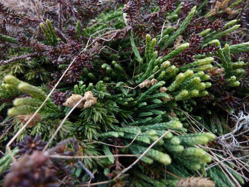 2011-06-08-1250_ulvefod_vegetation