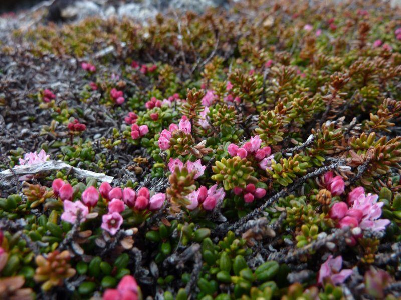 2011-06-08-1252_vegetation