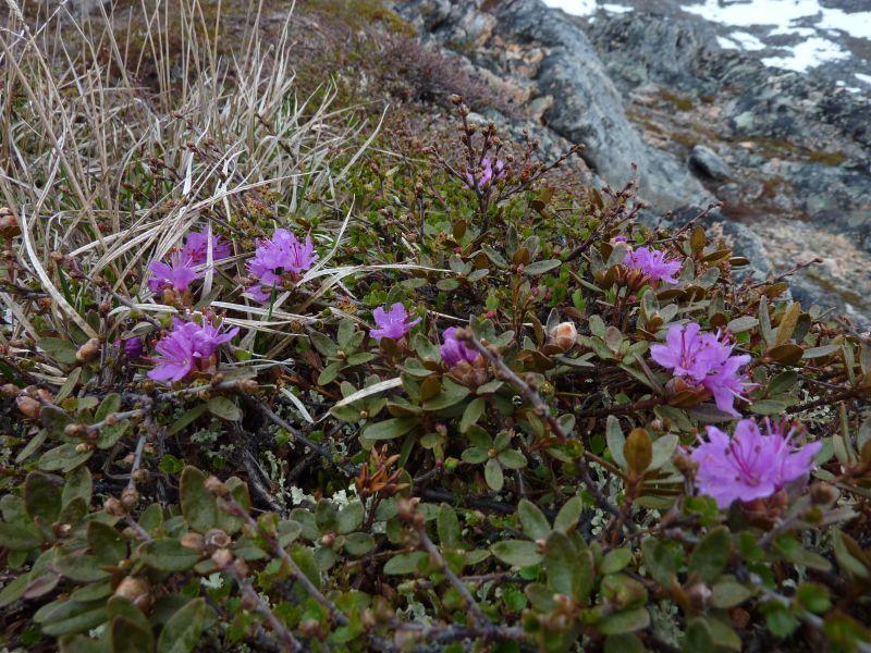 2011-06-08-1256_vegetation
