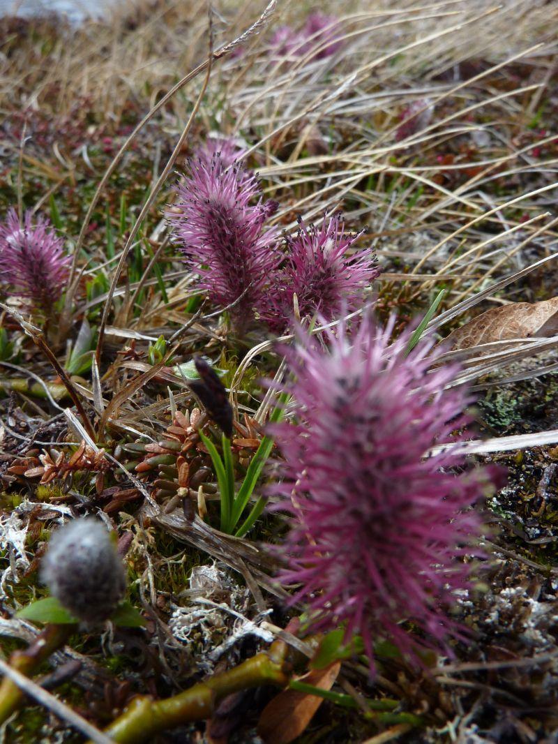 2011-06-09-1324_vegetation
