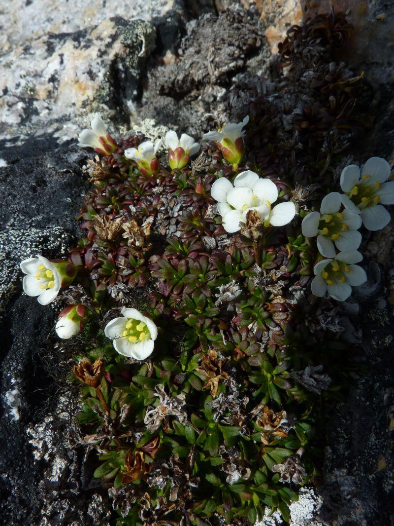 2011-06-10-1104_vegetation