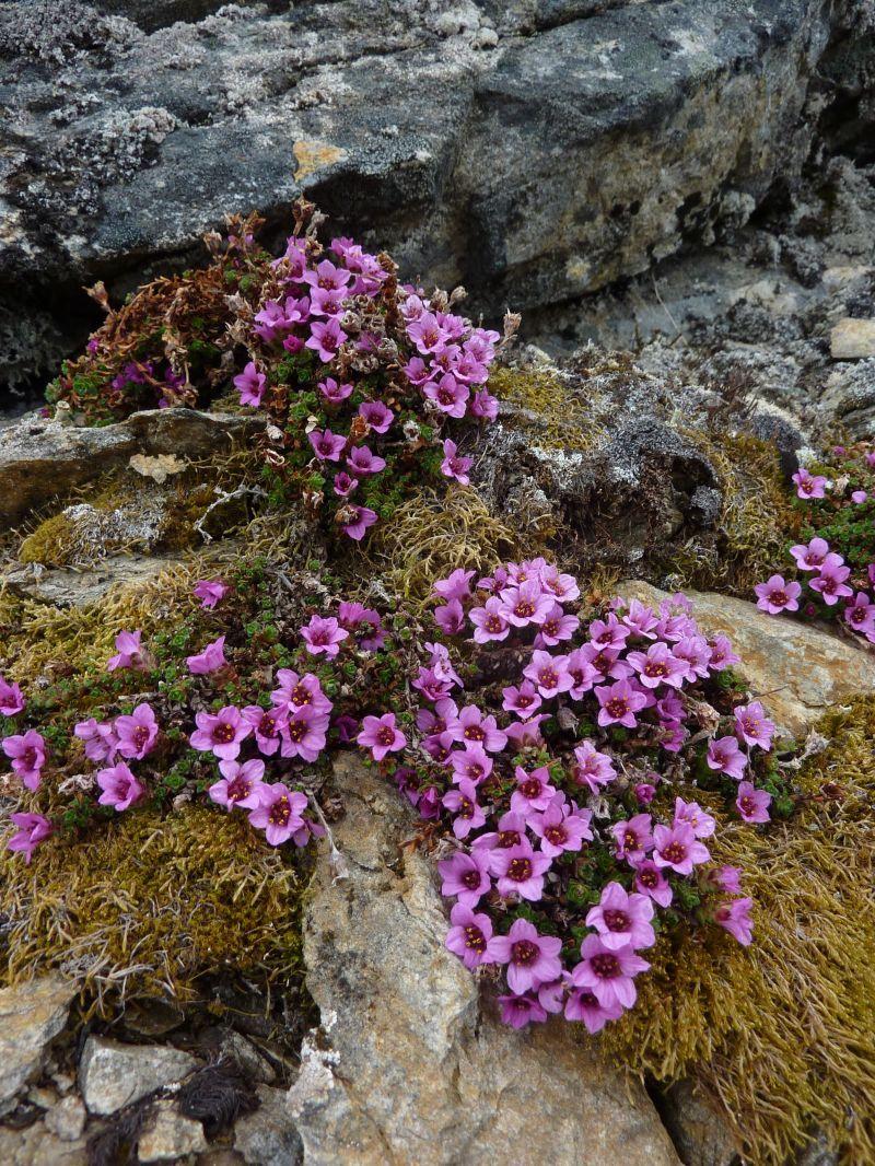 2011-06-25-1313_vegetation