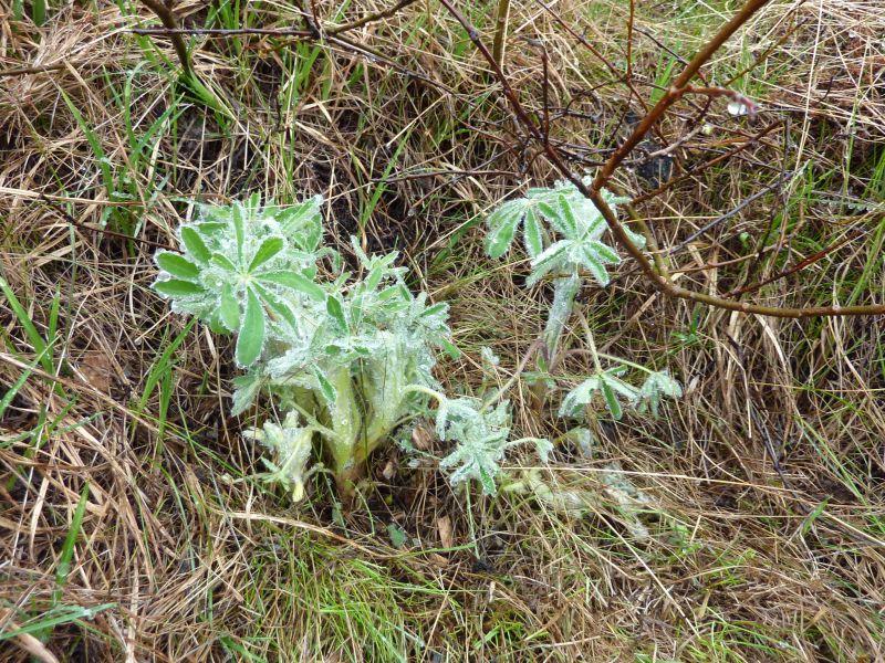 2011-06-27-1300_vegetation