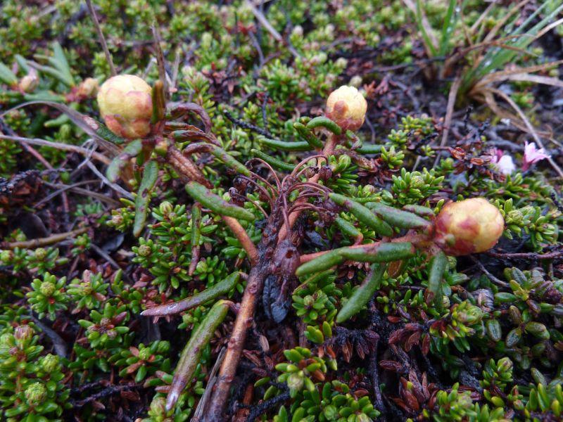 2011-06-27-1307_vegetation