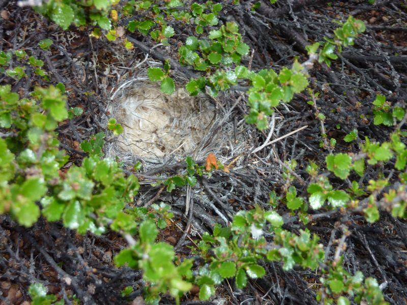 2011-07-31-2039_-_rede_vegetation