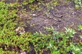 2011-07-27-1344_-_svamp_vegetation