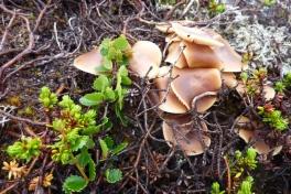 2011-07-27-1344_-_svamp_vegetation_2