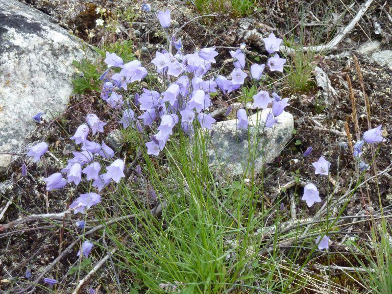 2011-08-01-0914_-_vegetation