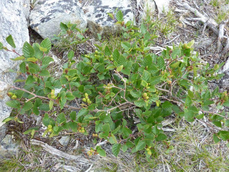 2011-08-01-1009_-_vegetation