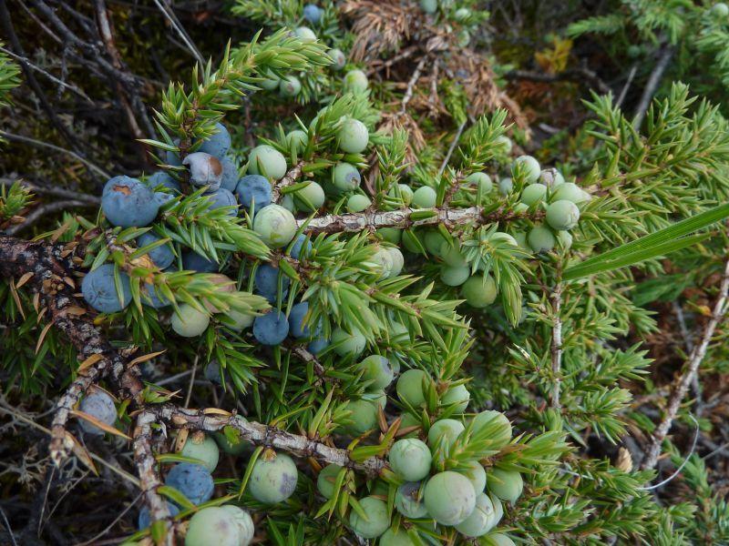 2011-08-01-1302_-_vegetation