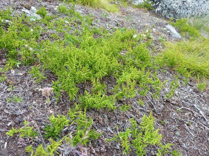 2011-08-01-1311_-_vegetation