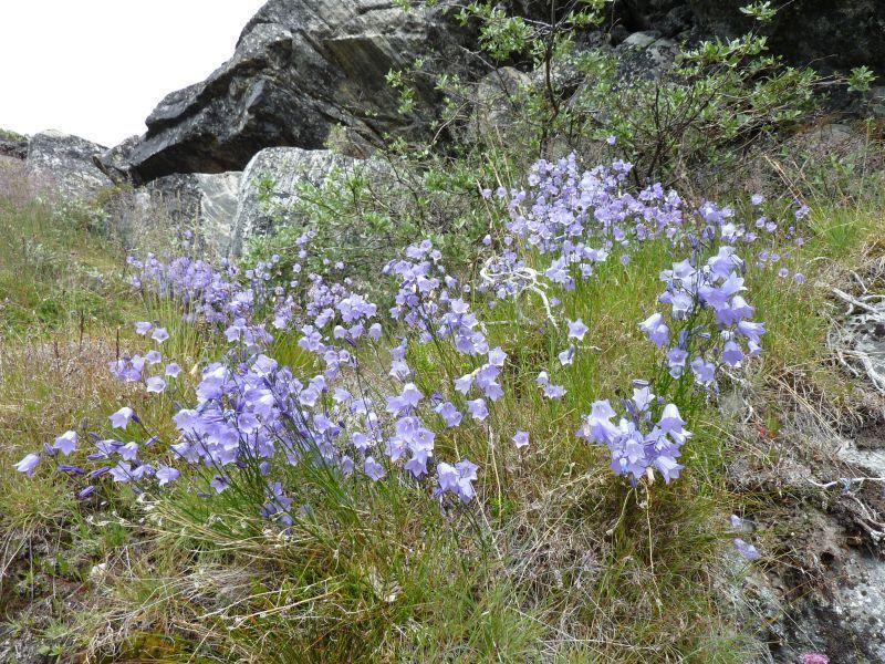 2011-08-01-1343_-_vegetation