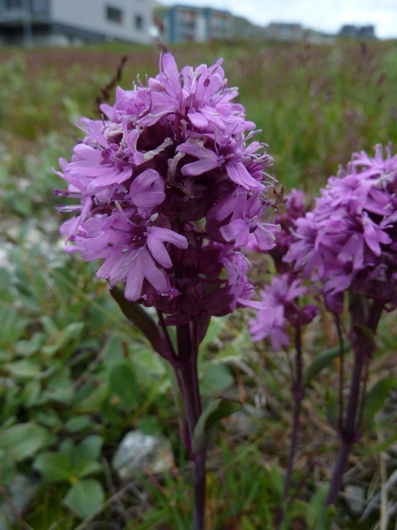 2011-08-02-1534_-_vegetation_2