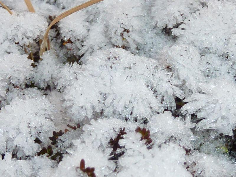 2011-11-18-1413_-_snekrystal_vegetation_4
